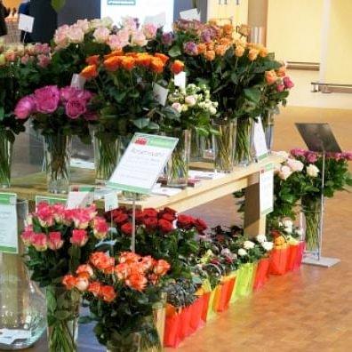 Blumen Garten Küng AG