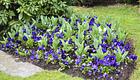 Garden Care GmbH