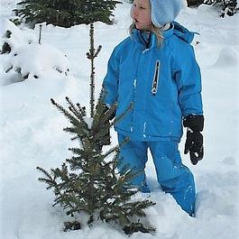 Der Wunschbaum(bäumchen) ist gefunden