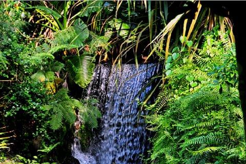 Masoala: der Regenwald-Naturpark in Madagaskar