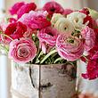 Fleurs Jean-Jacques