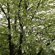 Baumlehrpfad auf dem Waldau-Areal
