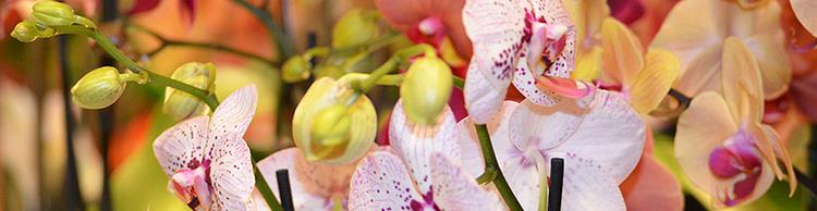 Atelier Cagna-Fleurs