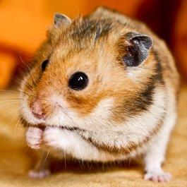 Tierarztpraxis Lindenacker
