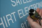 Hirt Elektronik GmbH