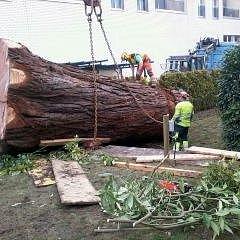 Auch grosse Bäume kein Problem