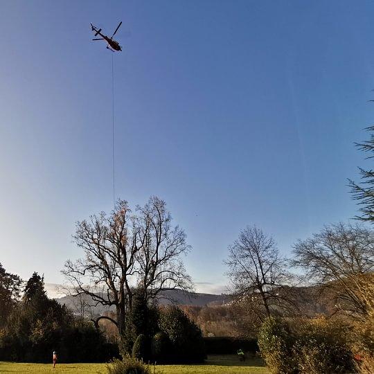Baumfällung mittels Helikopter