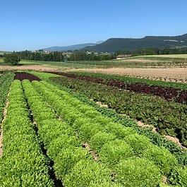 Les Jardins du Closy - Puidoux - Ferme - Légume - Vente