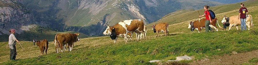 Schweiz. Patenschaft f. Berggemeinden