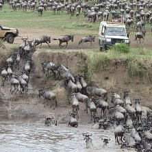 serengeti-river-crossing