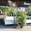Pflanzenlieferung in die ganze Schweiz