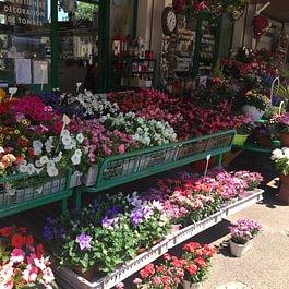 A.Pinto Fleurs
