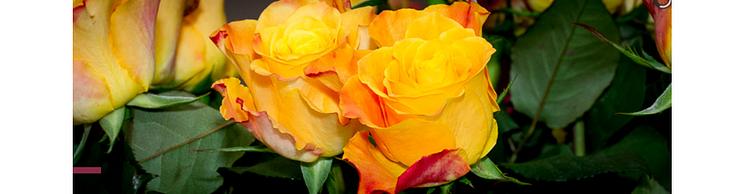 Blumen Dufour AG