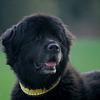 Hundesalon Nikita