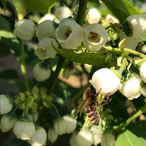 Blüten1