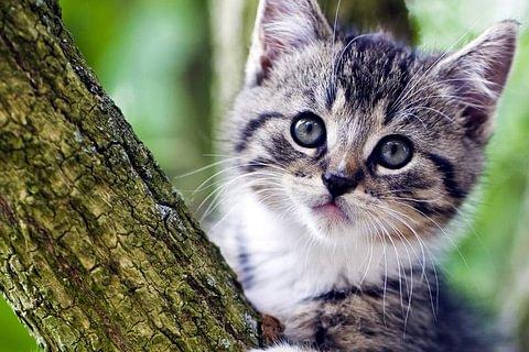 Tierbetreuung / Katzensitting
