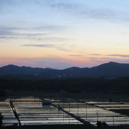 Reisfelder in der Abenddämmerung