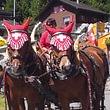 Pferdegespann im Sommer