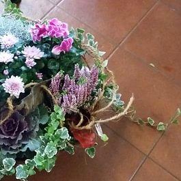arrangiamenti con piante di stagione