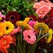 Cagna Fleurs Atelier floral et livraison - Crissier