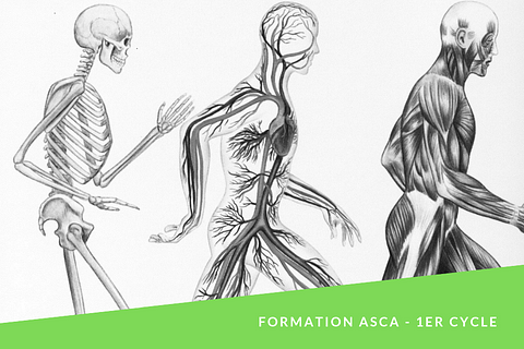 Anatomie, Physiologie & Pathologies . formation de 150 heures (ASCA/RME)