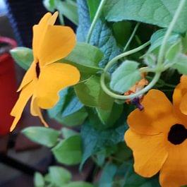Joli choix de plantes pour l'extérieur