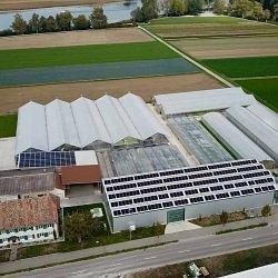 Jud Bio-Jungpflanzen AG