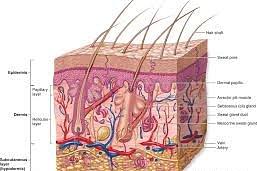 Specialista MTC in dermatologia