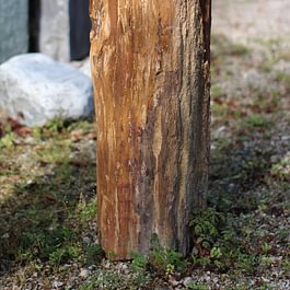 Versteinerter Baumstamm  (zu verkaufen)