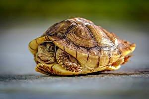 Tierbetreuung / Schildkrötenpflege