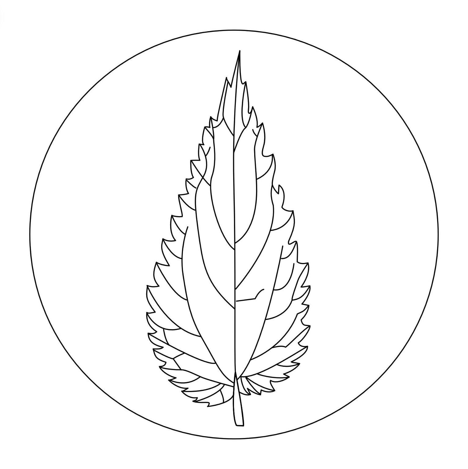 Der Pflanzenkoch Jonas Brunner