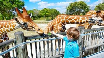 schönsten Tierparks