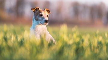 Flöhe bei Hunden
