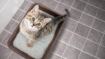 Katze mit Durchfall