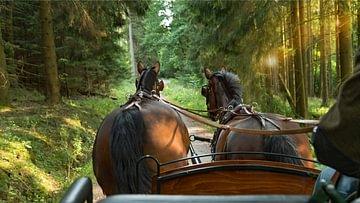 der Kutschenfahrt in der Schweiz