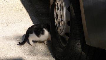 Katze überfahren
