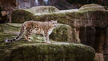 schönsten Zoos der Schweiz
