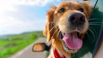 Hund im Auto sichern