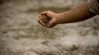 Ballaststoffe bzw. Nahrungsfasern sind wichtig für die Gesundheit und in pflanzlichen Lebensmitteln enhalten. Es wird zwischen wasserlöslichen und wasserunlöslichen Ballaststoffen unterschieden.