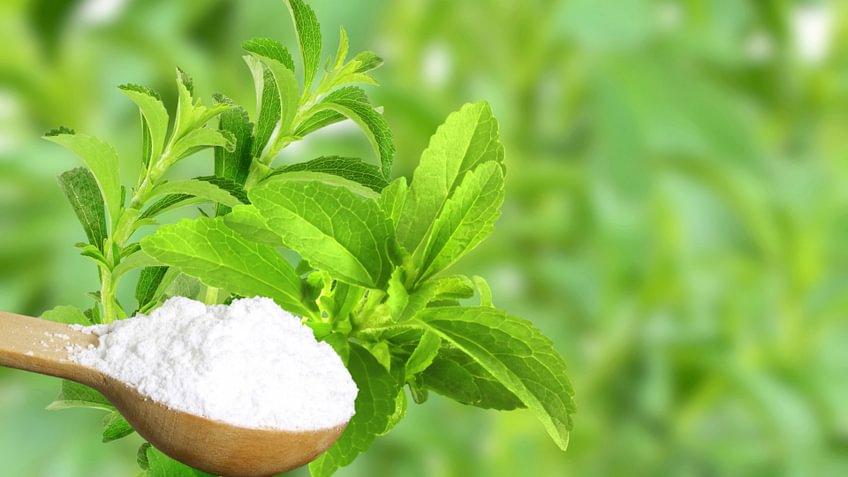 Für eine Ernährung ohne Zucker gibt es viele Alternativen. Zum Beispiel Stevia